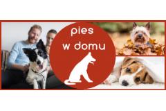 Pies w domu - jak pomóc mu się zaaklimatyzować w nowym miejscu?