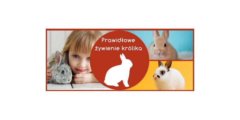 Co jedzą króliki ? - prawidłowe żywienie królika