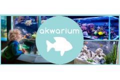 Jak wybrać i przygotować akwarium dla rybek?
